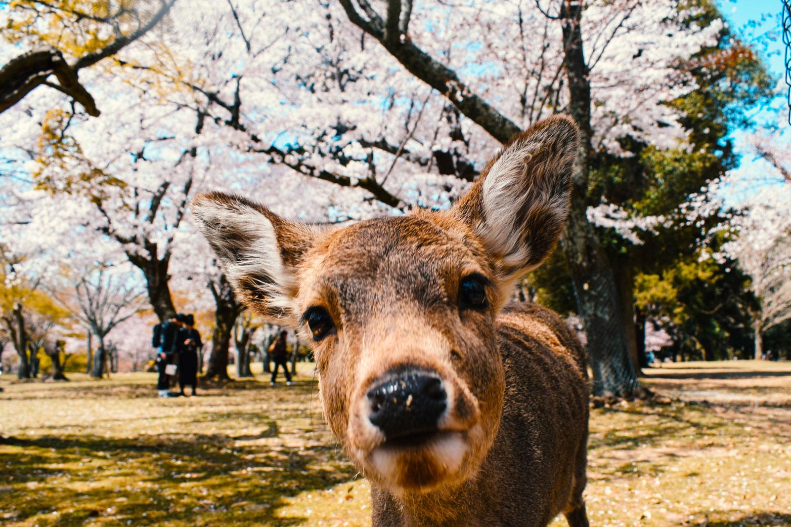 Hi cute encounter!